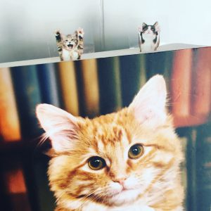 Zelfklevende katten